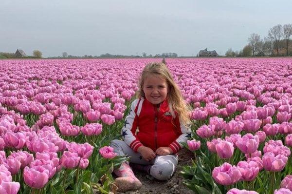 Tulpenvelden - De Hooijberg